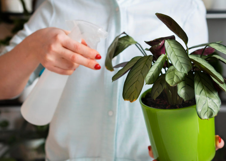 Cuida las plantas