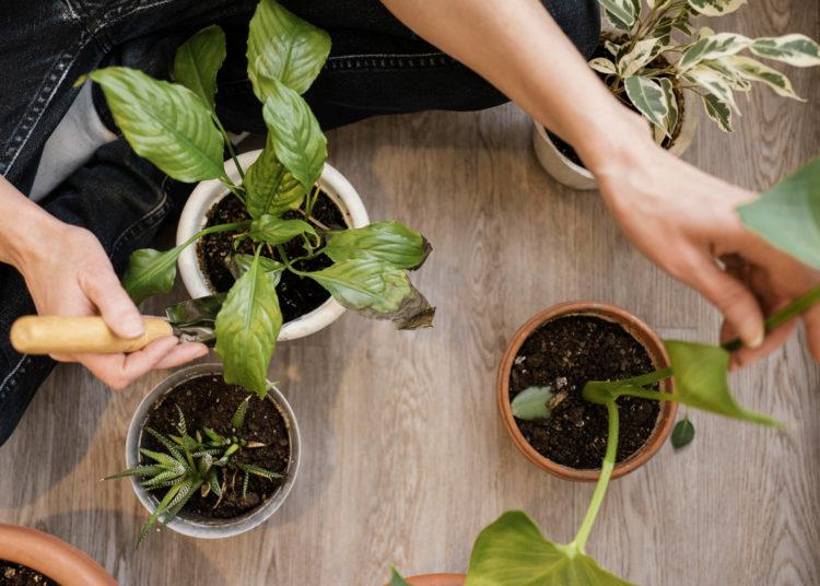 Trucos para limpiar las plantas y darles brillo sin dañarlas
