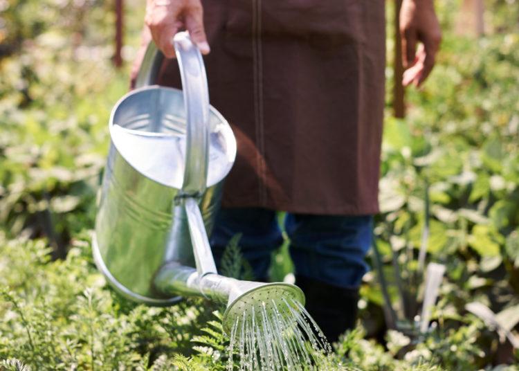 Cultivo de alimentos en huerto