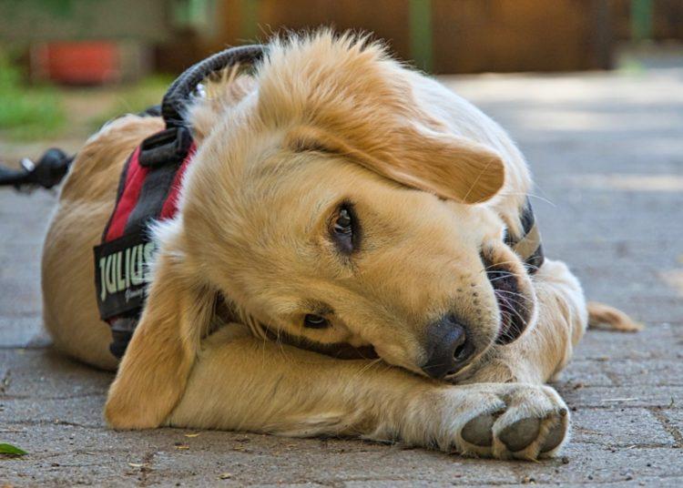 Cuidado con los excesos en la alimentación canina
