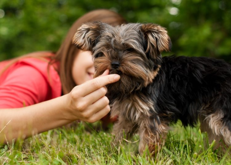 Alimentos para perros: cuida a tu mascota con una dieta apropiada y segura para el estómago
